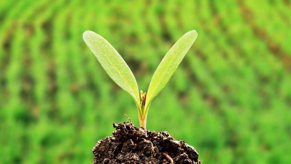 Agricoltura: più batteri (buoni), meno fitofarmaci