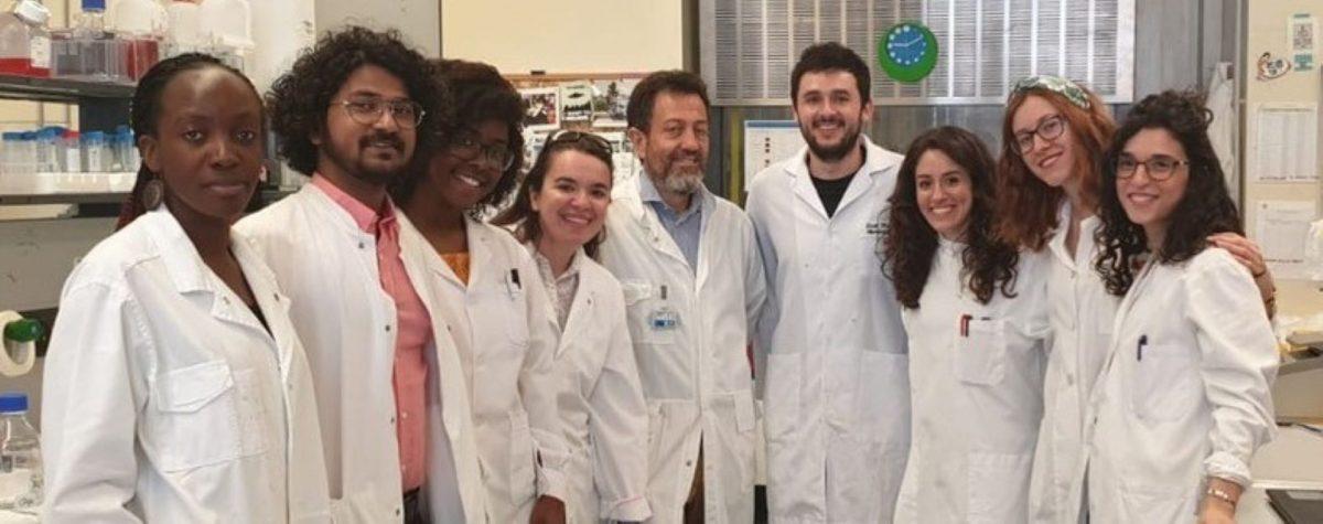 Lo stress cellulare accelera la risposta immunitaria alle infezioni da virus