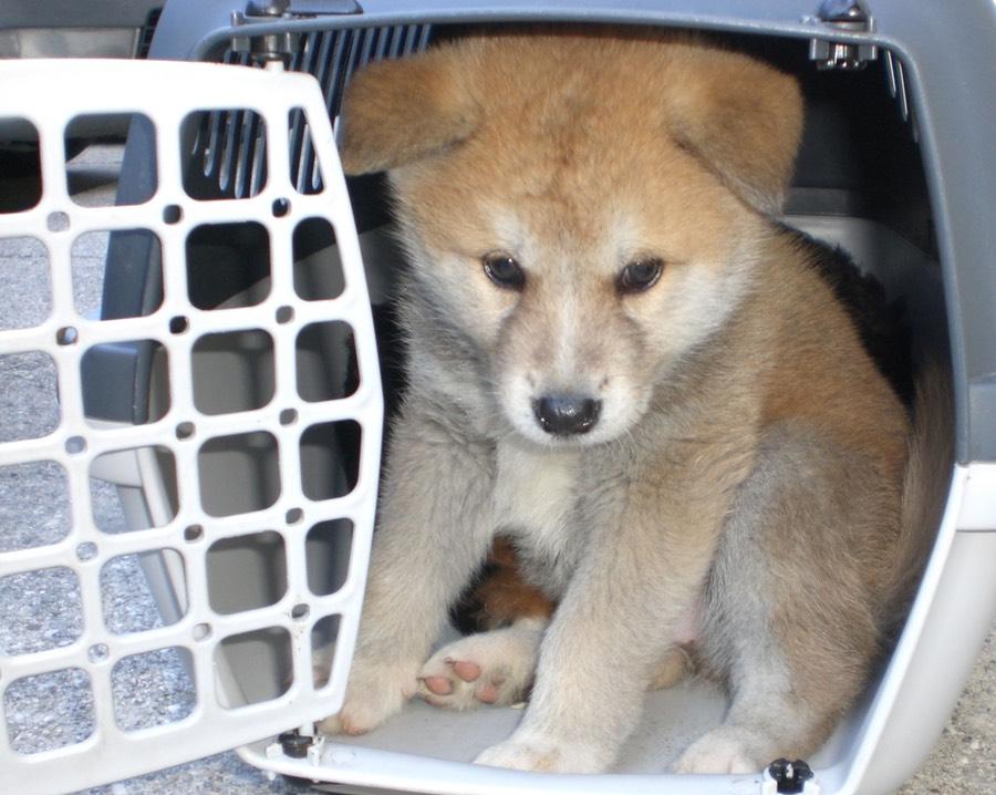Traffico di animali: formazione condivisa tra Italia e Austria per contrastare il fenomeno
