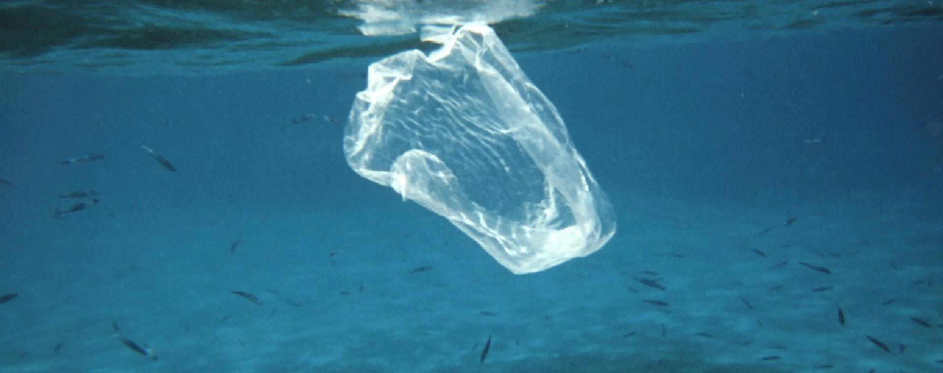Immagine: Dalla bottiglia al piatto: come la plastica è entrata nella catena alimentare