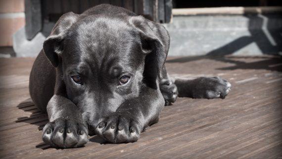 Traffico illecito di animali: parte il progetto Bio-Crime