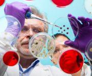 Da quattro geni si rigenerano gli organi perduti
